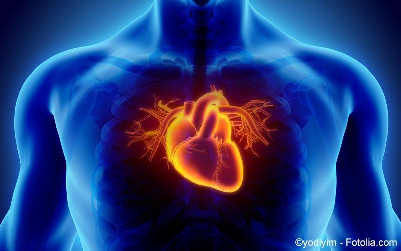 Herz im Brustkorb