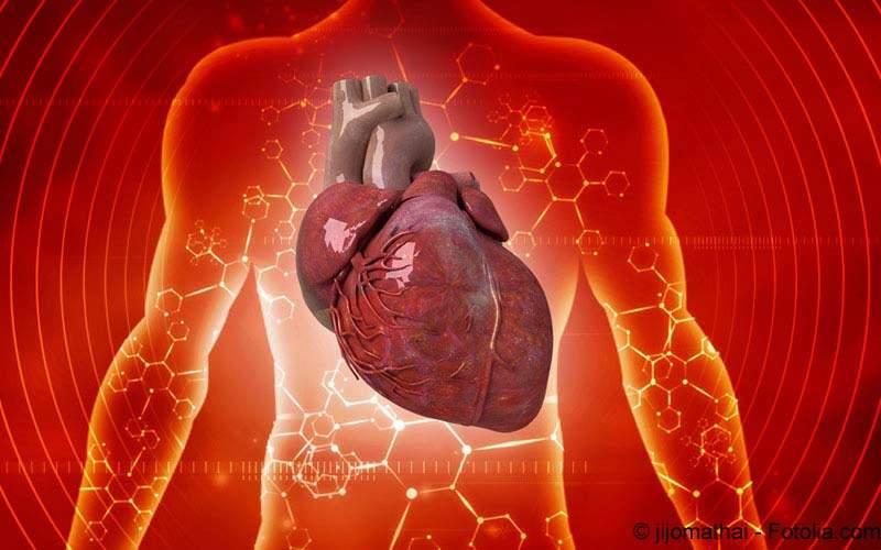 Kardiologie Herz