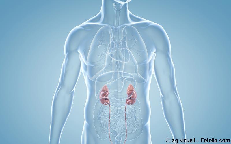 Nieren - Körper