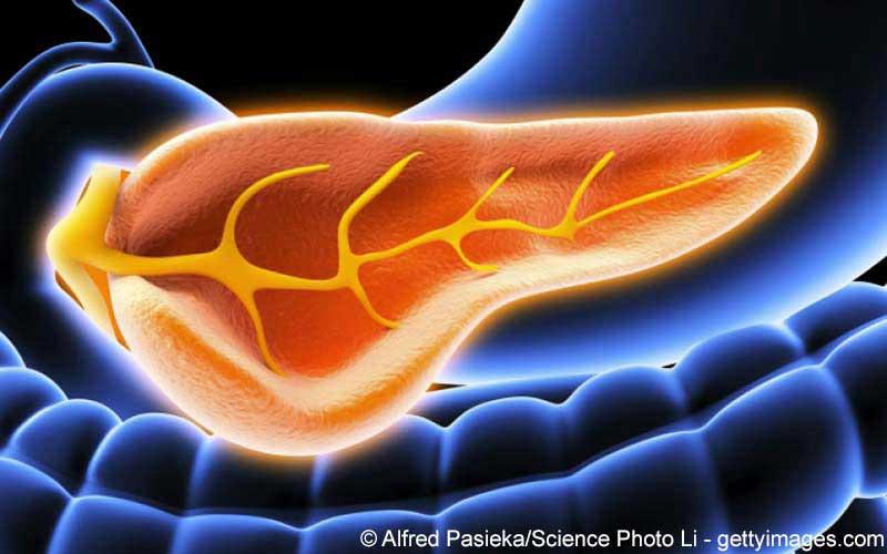 Pankreas Bauchspeicheldrüse