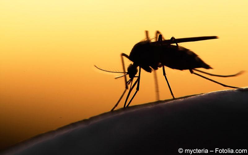 Vielversprechende erste Erfolge in der Malariaprophylaxe