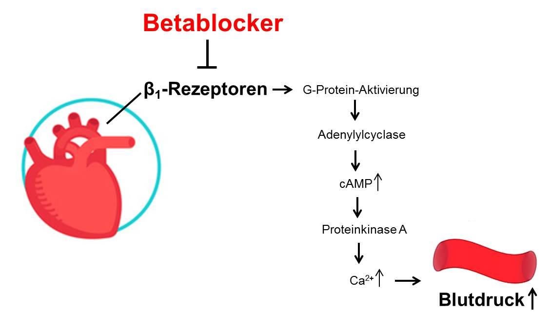 Betablocker